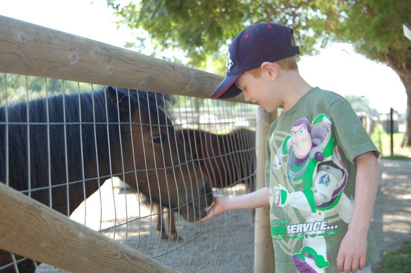 2010 Zoo 004